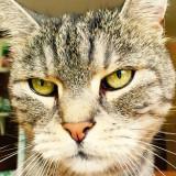4 skvělé dárky pro vaši kočku