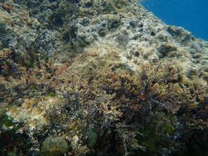 Vodní svět pod mořskou hladinou Pag